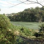 京亭 - 庭園から見る荒川