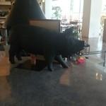 PASTA HOUSE AWkitchen FARM - 店内の豚の飾り物