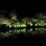 御茶屋Bar - 鏡のような水面にライトアップされた木々が映る