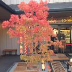 タリーズコーヒー - お店前にも紅葉