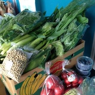 産地直送オーガニック野菜