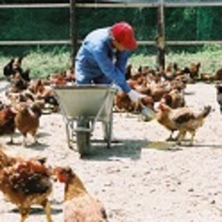 【幻の地鶏】~みやざき地頭鶏~
