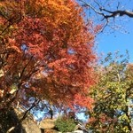33073486 - 紅葉がキレイな季節ですね
