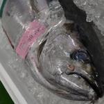回転寿司うみっ子 - 料理写真:毎月第2土曜12時よりまぐろ解体ショー