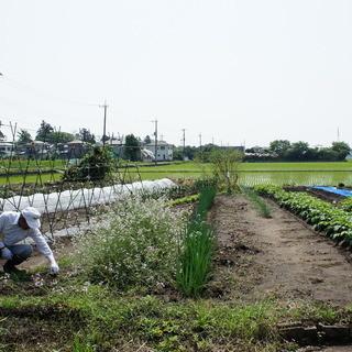 自家農園栽培の野菜