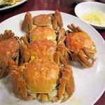 33210824 - 上海蟹