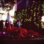 開晴亭 - 夜前を通ったらとっても素敵なイルミネーションがありました。
