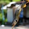竜宮茶屋 - 料理写真:出店の方で買った鮎の塩焼き
