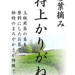 和束茶屋 山甚 - 若葉摘み 特上かりがね