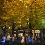 カフェドゥラプレス - 夜のイチョウ並木
