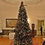 綱町三井倶楽部 - 2014クリスマスツリー