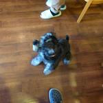 ポンポンマム - 愛犬ハル