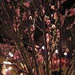 カフェ マメヒコ - テーブルの上には、大きな桃の花