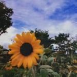 菊水苑 -