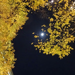 マヌエル タスカ ド ターリョ - クリアーな冬の空に満月が