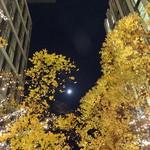 マヌエル タスカ ド ターリョ - 丸の内中通りに上がった満月