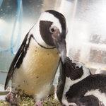 ペンギン シーフードワールド 漁亭 - なんと言っても、まずはペンギンちゃん♪