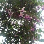 花の下のレストラン - フクシア