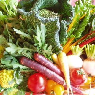 ◆採れたて有機野菜と地元食材!