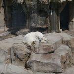 カレー&カフェ カレー王子 - 動物園のシロクマ