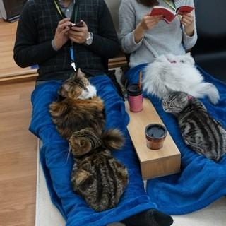 猫とお客様のための癒しの空間