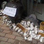 34730499 - 入り口には牡蠣の殻が