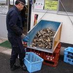 かき小屋 - 店の前に野積みされた牡蠣