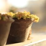マンハッタン珈琲店 - テラスの鉢植