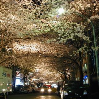 満開の桜が窓いっぱいに広がっています♪