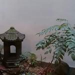普茶料理 梵 - お部屋から見える坪庭