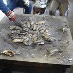 かき焼 かまくら まるふ - 牡蠣を焼く鉄板