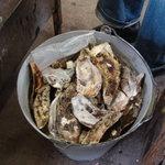 かき焼 かまくら まるふ - 牡蠣を入れるバケツ