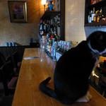 34953119 - Café泉のニャンコ
