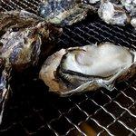住栄丸 - 殻のサイズいっぱいまで育った3月末の牡蠣