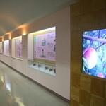 紀州梅干館 - 工場見学をしながら梅干について学びます♪
