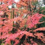 だいどこ やぶれ傘 - 永保寺境内の紅葉