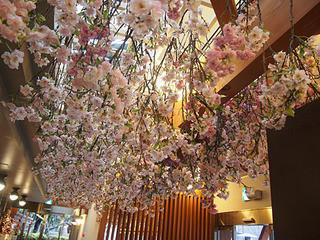 スターバックスコーヒー 上野恩賜公園店 - 店内は桜の装飾!