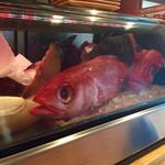 仁 - ネタケースのお魚たち