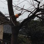 森のカフェ - 店の前の木には、小鳥のためのミカンが。
