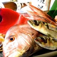 うまいもんと里の酒 びんちょろ - 毎日築地から仕入れる魚。