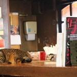 タケヤ - 看板ネコのモモちゃん。お気に入りはカウンターTOP