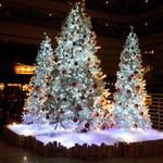 35414667 - クリスマスツリー