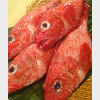 築地直送の鮮魚たち。
