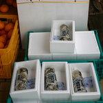 はねやすめ - 生牡蠣 約30個 1,000円も売っています