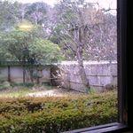 35642136 - 店内から武家屋敷のお庭がゆっくり見られます。