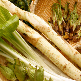 箱根で採れる山菜