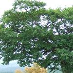 357336 - 「ファイト」オープニングの木の一部です。