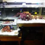 鮎味亭 - 海水魚達も御来店お待ちしております。