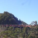 沙羅の木 - 太鼓谷稲荷神社 円形