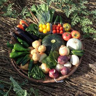 荒削りで、食べ応えある野菜たち